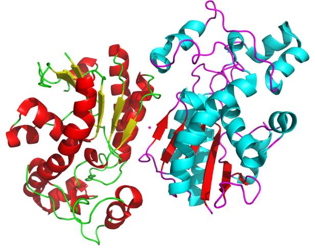 Key Difference - Homodimer vs Heterodimer