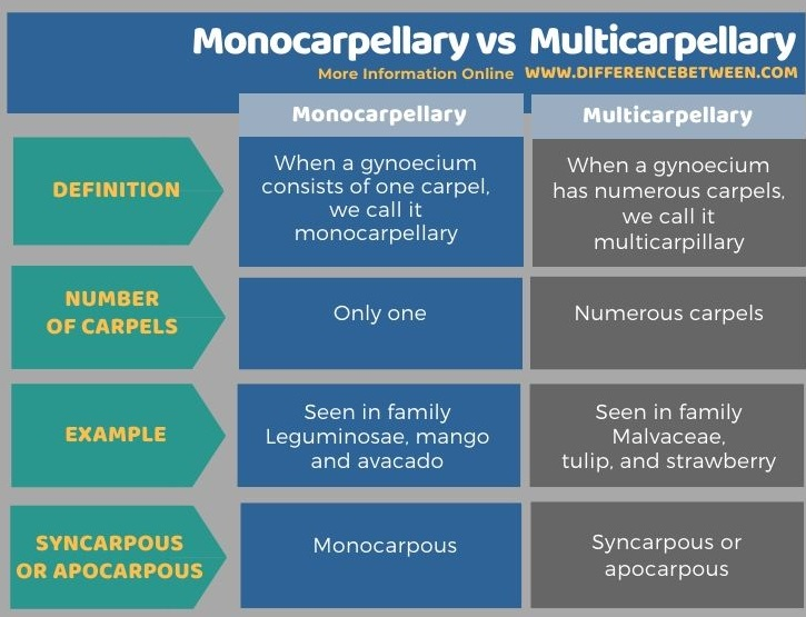Difference Between Monocarpellary and Multicarpellary in Tabular Form