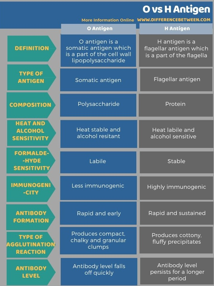 Difference Between O and H Antigen in Tabular Form