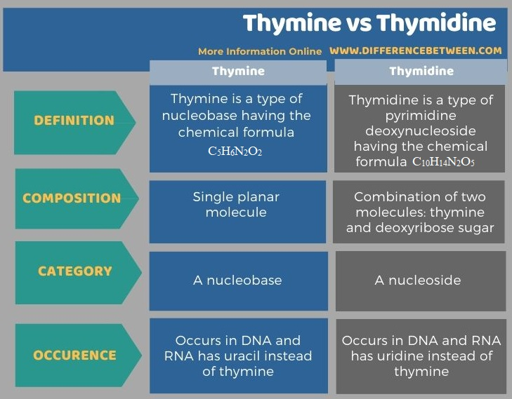 Difference Between Thymine and Thymidine in Tabular Form