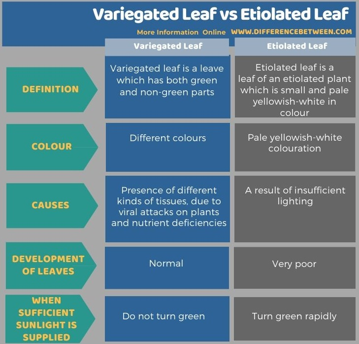 Difference Between Variegated Leaf and Etiolated Leaf in Tabular Form