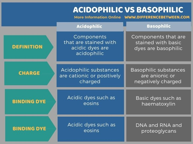 Difference Between Acidophilic and Basophilic in Tabular Form