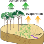 Difference Between Actual Evapotranspiration and Potential Evapotranspiration