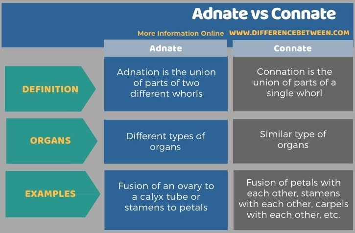 Difference Between Adnate and Connate in Tabular Form