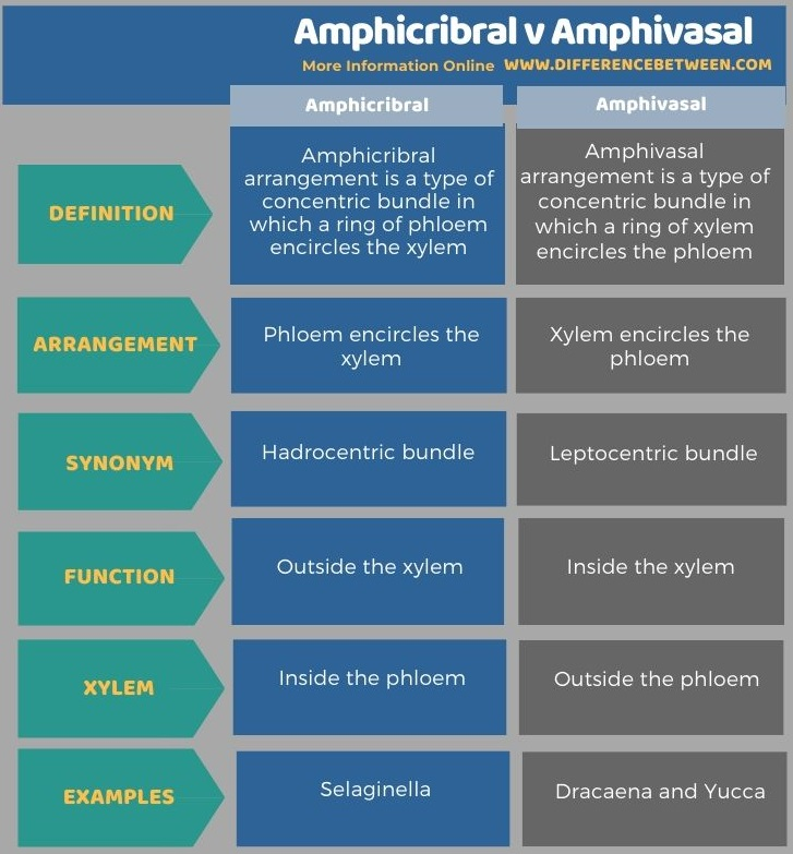 Difference Bestween Amphicribral and Amphivasal in Tabular Form