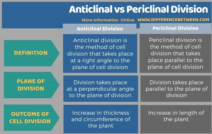 Difference Between Anticlinal and Periclinal Division in Tabular Form