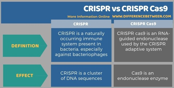 Difference Between CRISPR and CRISPR Cas9 in Tabular Form