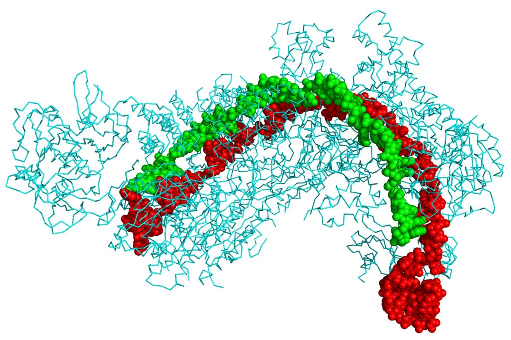 Difference Between CRISPR and CRISPR Cas9
