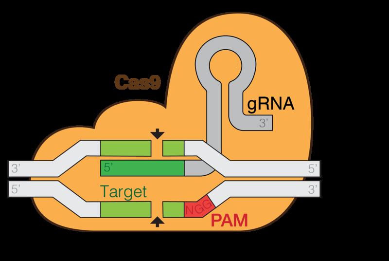 Key Difference - CRISPR vs CRISPR Cas9