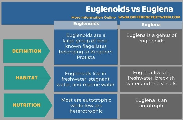 Difference Between Euglenoids and Euglena in Tabular Form