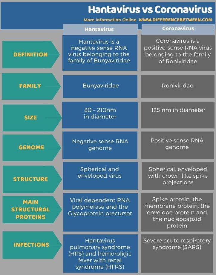 Difference Between Hantavirus and Coronavirus in Tabular Form
