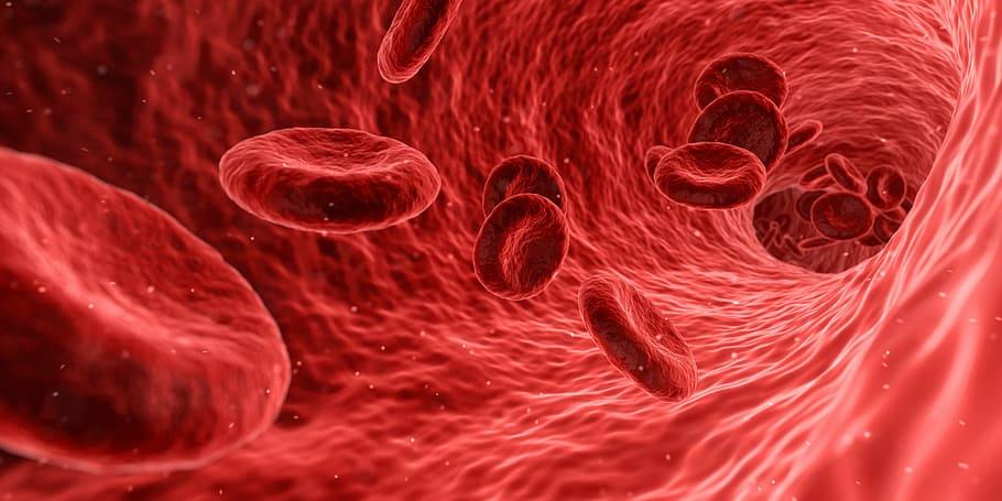 Key Difference - Menstrual Blood vs Regular Blood