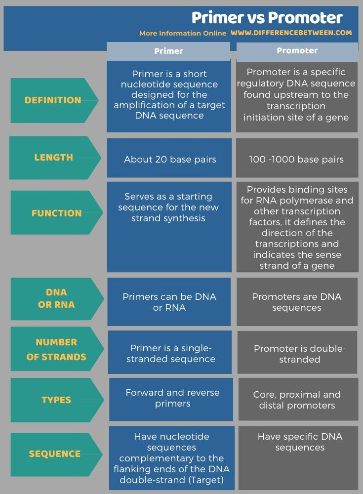 Difference Between Primer and Promoter in Tabular Form