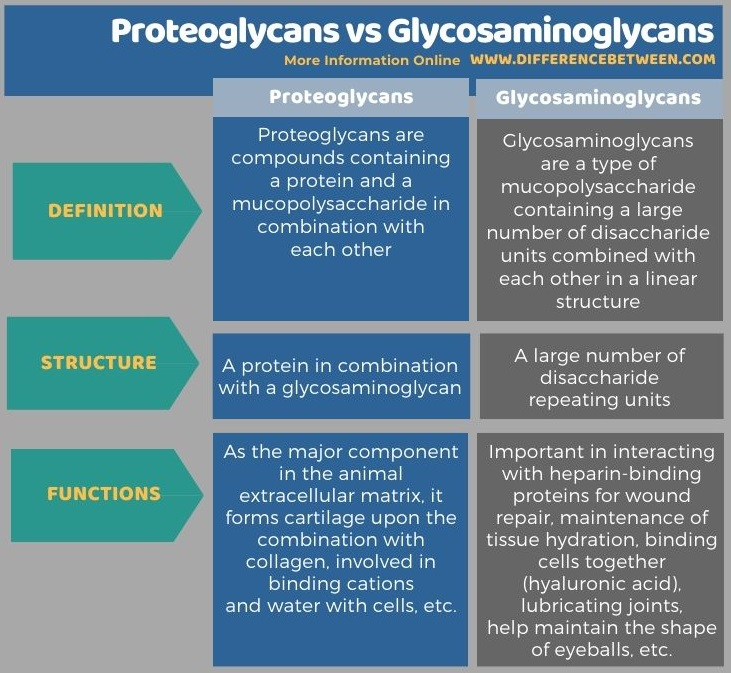 Difference Between Proteoglycans and Glycosaminoglycans in Tabular Form