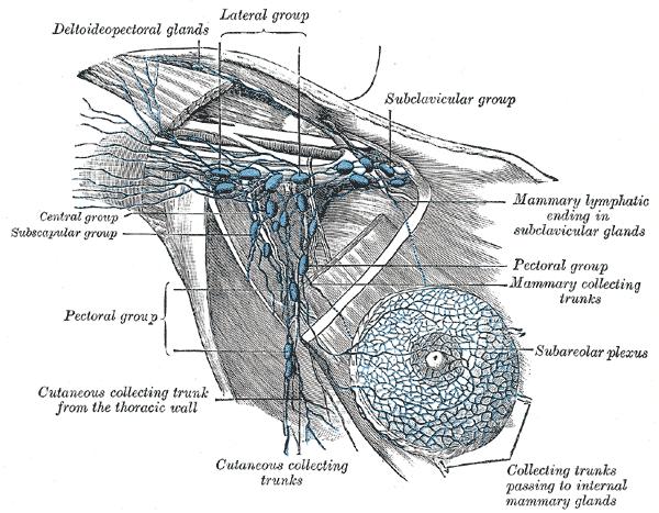 Key Difference - Sentinel vs Axillary Lymph Nodes