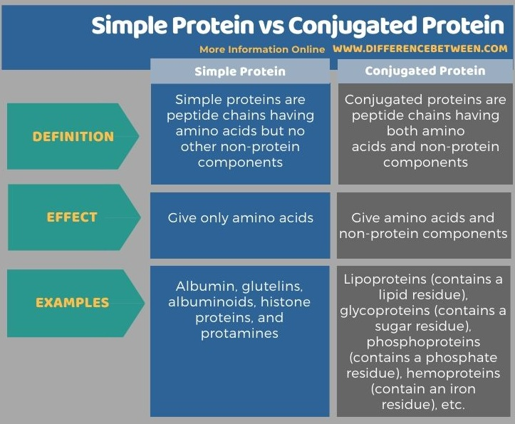 Difference Between Simple Protein and Conjugated Protein in Tabular Form