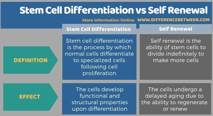 Difference Between Stem Cell Differentiation and Self Renewal - Tabular Form