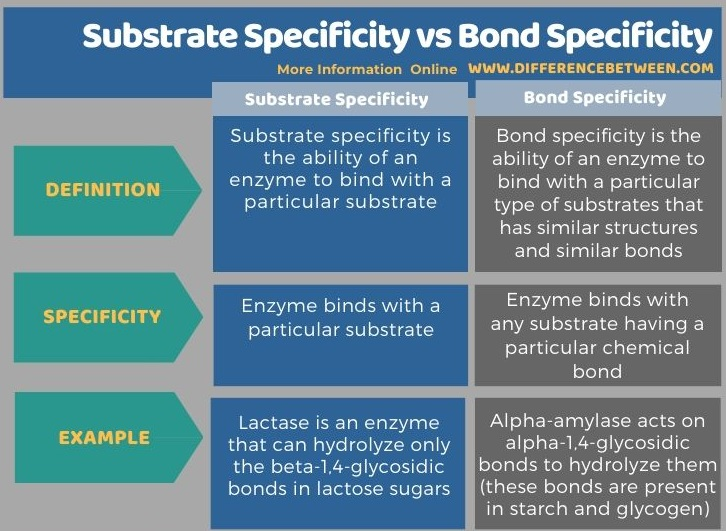 Difference Between Substrate Specificity and Bond Specificity in Tabular Form