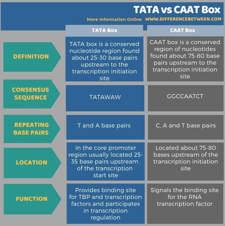 Difference Between TATA and CAAT Box in Tabular Form