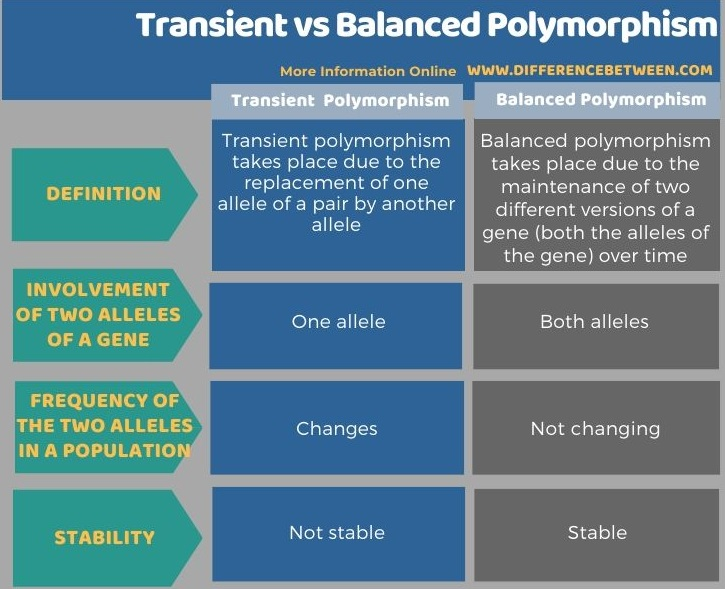 Difference Between Transient and Balanced Polymorphism in Tabular Form