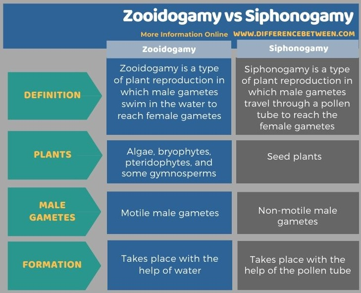 Difference Between Zooidogamy and Siphonogamy in Tabular Form