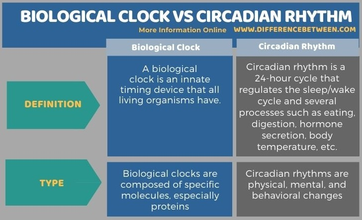 Difference Between Biological Clock and Circadian Rhythm in Tabular Form