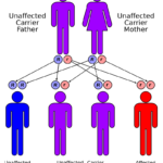 Difference Between Compound Heterozygote and Double Heterozygote