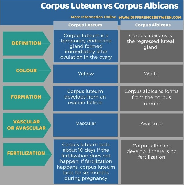 Difference Between Corpus Luteum and Corpus Albicans in Tabular Form