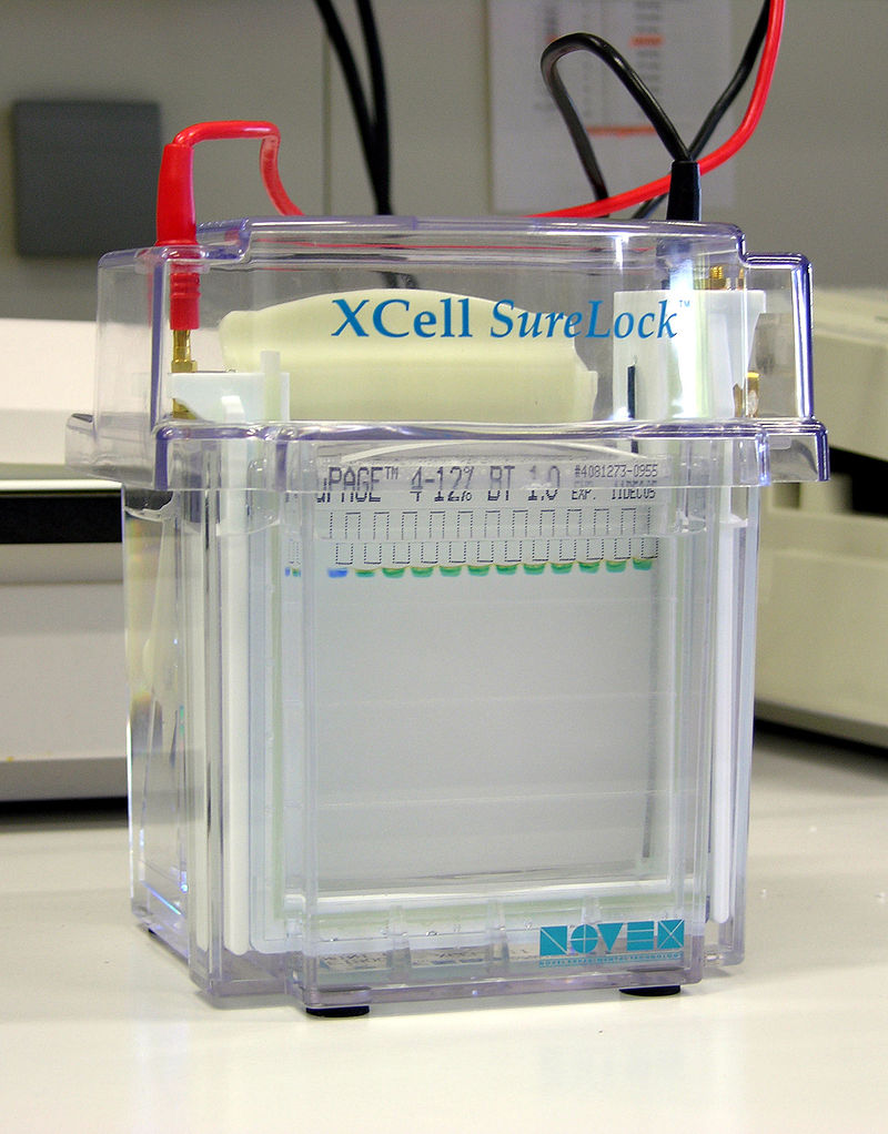 Difference Between Electrophoretic and Asymmetric Effect