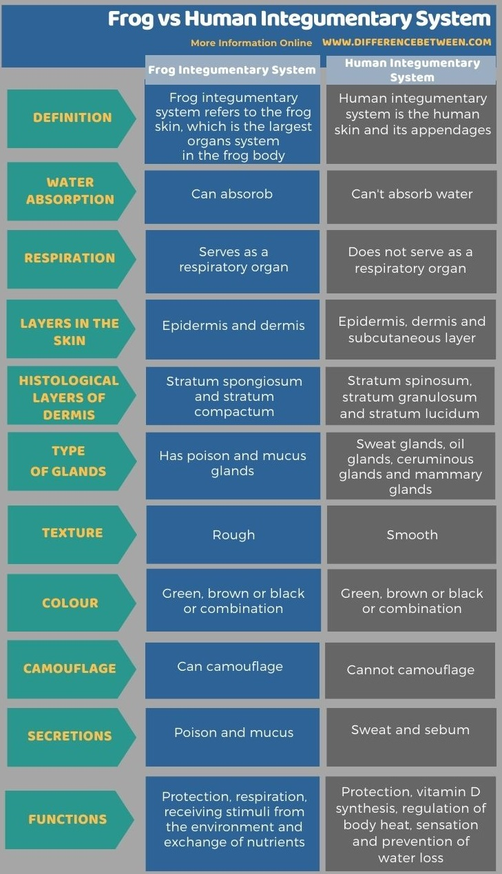 Difference Between Frog and Human Integumentary System in Tabular Form