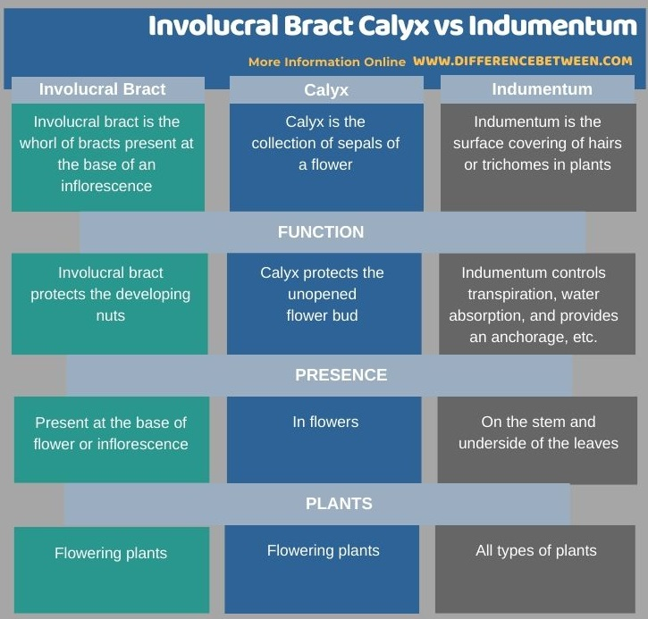 Difference Between Involucral Bract Calyx and Indumentum in Tabular Form