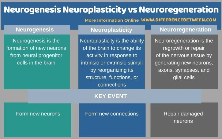 Difference Between Neurogenesis Neuroplasticity and Neuroregeneration in Tabular Form