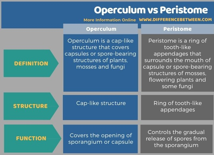 Difference Between Operculum and Peristome in Tabular Form