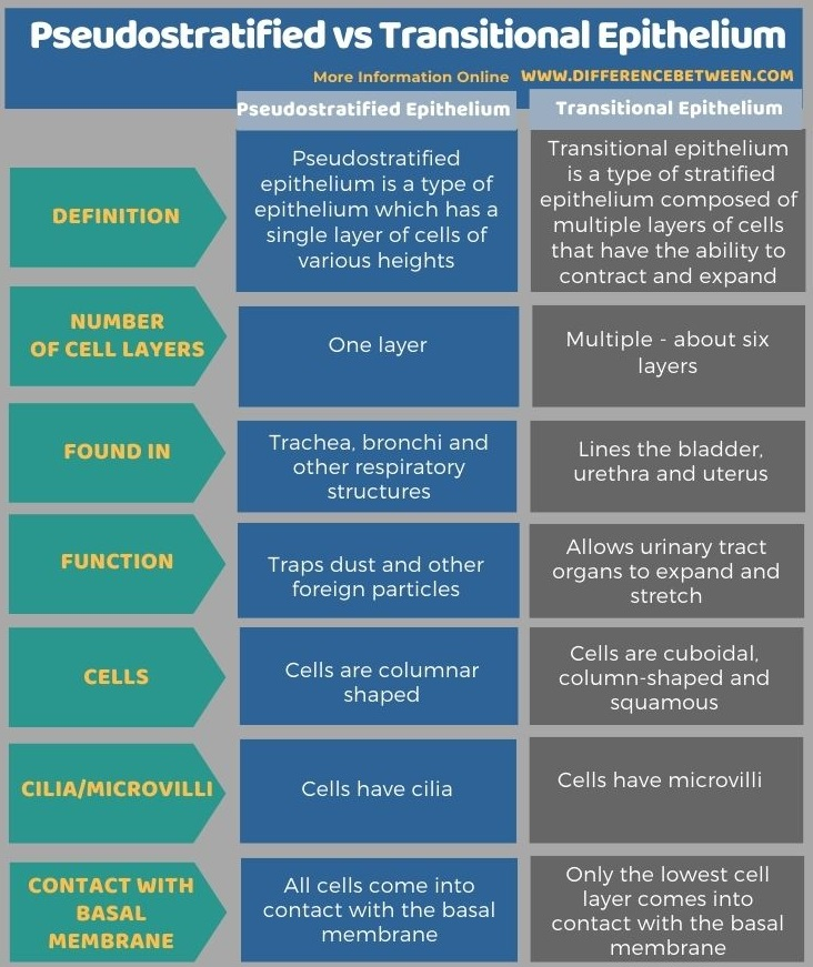Difference Between Pseudostratified and Transitional Epithelium in Tabular Form