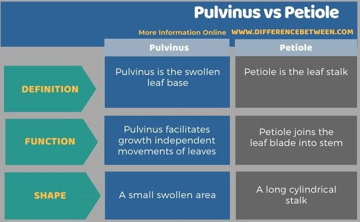 Difference Between Pulvinus and Petiole in Tabular Form