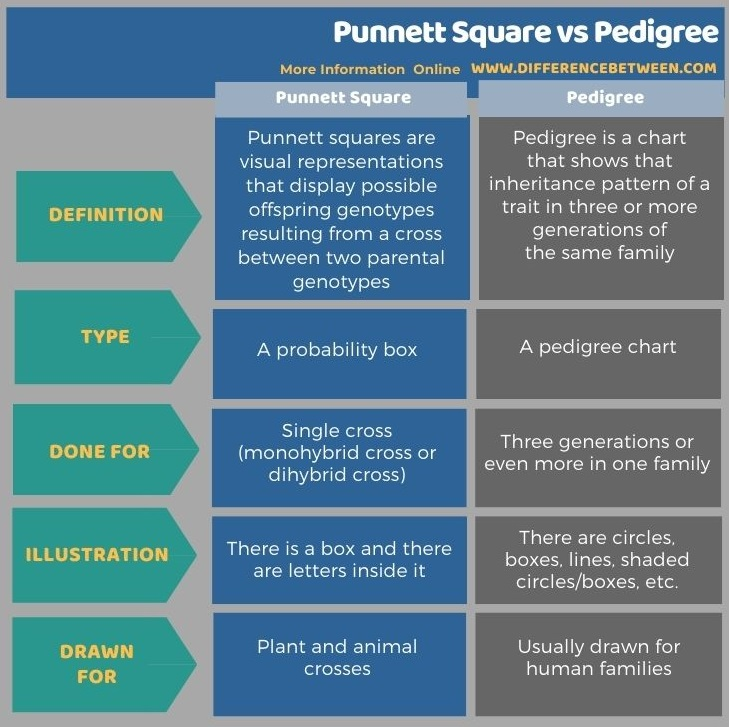 Difference Between Punnett Square and Pedigree in Tabular Form