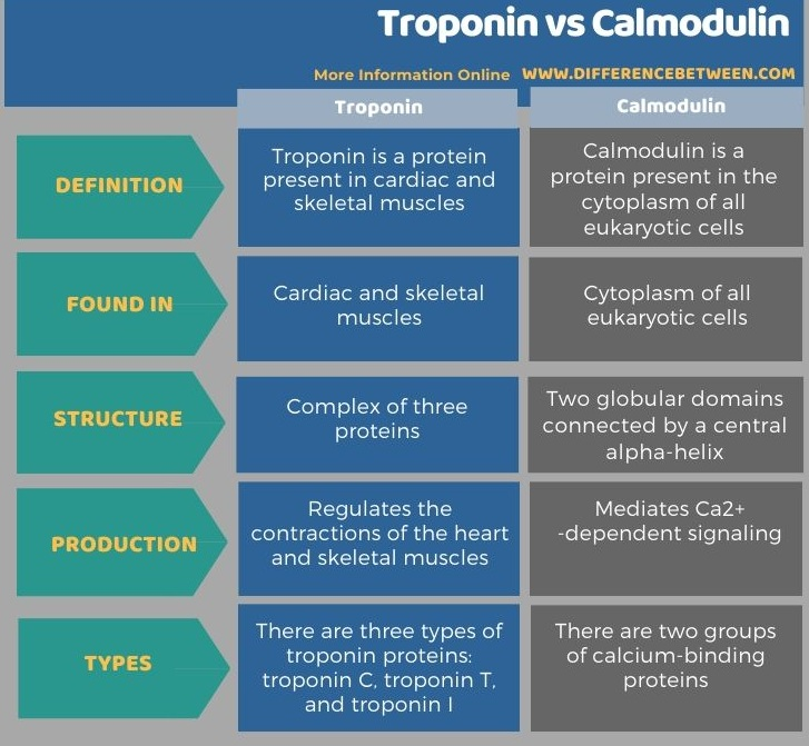Difference Between Troponin and Calmodulin in Tabular Form