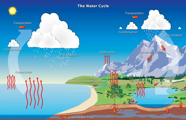 Difference Between Water Cycle and Nitrogen Cycle