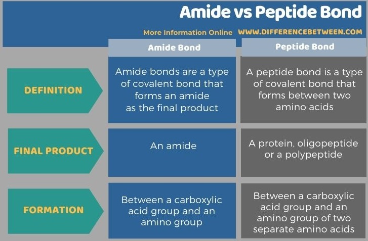 Difference Between Amide and Peptide Bond in Tabular Form