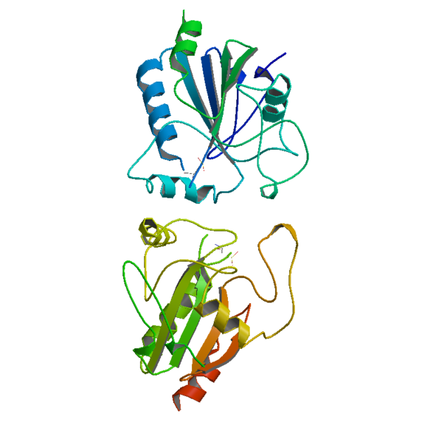 Difference Between Catalase and Peroxidase