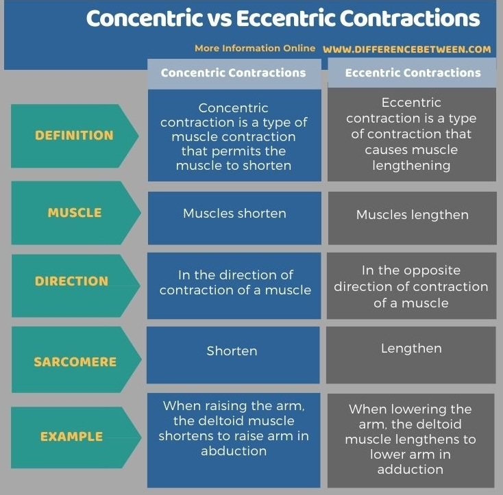 Difference Between Concentric and Eccentric Contractions in Tabular Form