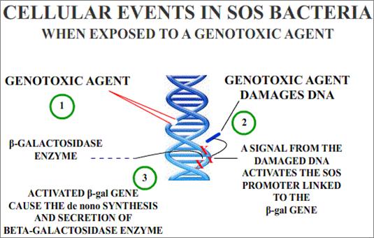 Key Difference - Cytotoxicity vs Genotoxicity