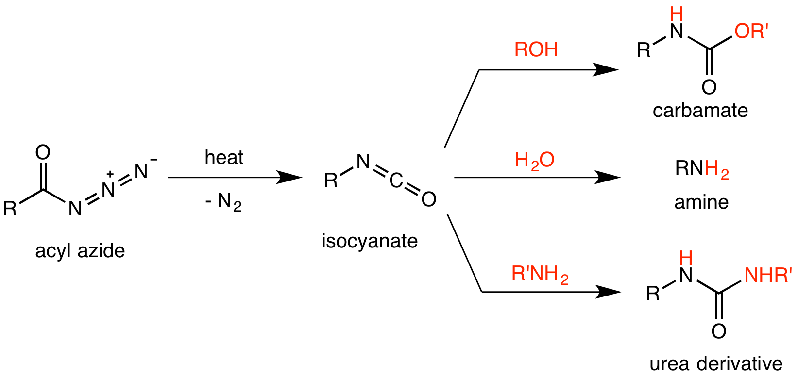Difference Between Hofmann and Curtius Rearrangement