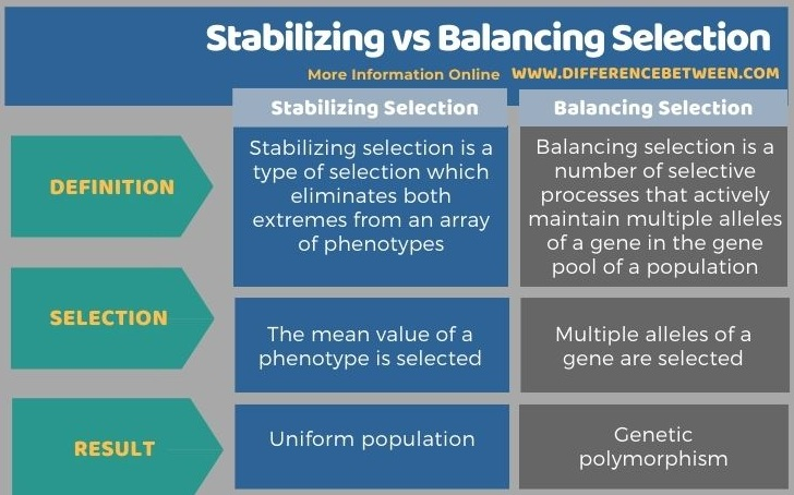 Difference Between Stabilizing and Balancing Selection in Tabular Form