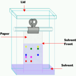 Difference Between Ascending and Descending Paper Chromatography