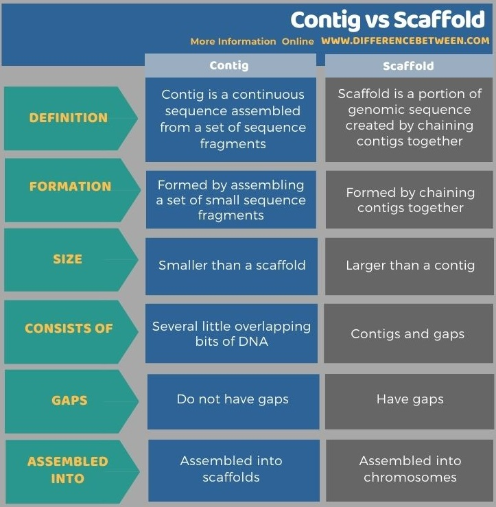Difference Between Contig and Scaffold in Tabular Form