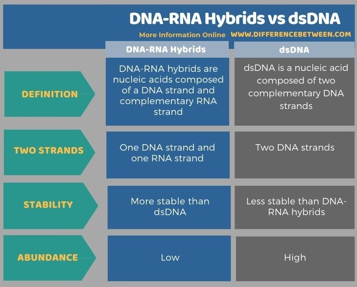 Difference Between DNA-RNA Hybrids and dsDNA in Tabular Form