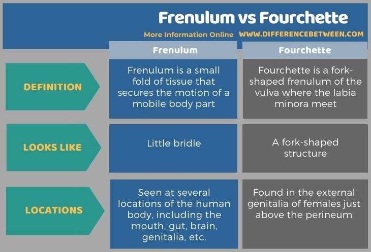 Difference Between Frenulum and Fourchette - Tabular Form