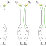 Difference Between Gametophytic and Sporophytic Self Incompatibility