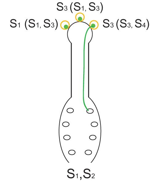 Key Difference - Gametophytic vs Sporophytic Self Incompatibility
